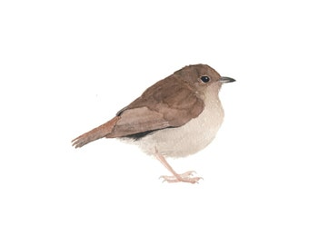 Brown Watercolor Bird - Fine Art Print