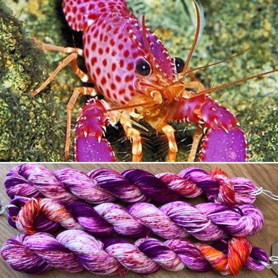 Violet Spotted Reef Lobster Miniskein 20g, merino nylon sock yarn