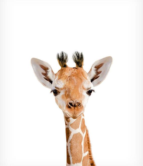 Giraffe Print Safari Animal Prints The Crown Prints Baby