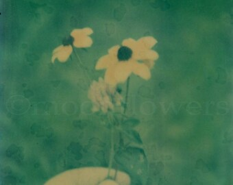 Handverlesenen Polaroid Print 8 x 8 Foto. Floral. Sommer. Verträumt. Whimsical.