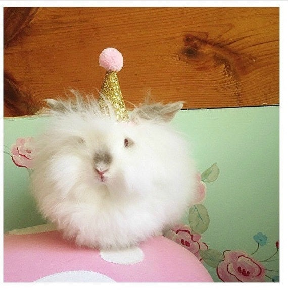 Birthday Party Hat || Animal Party Hat || Pet Accessory || Bunny Costume