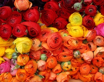 Flower Photography, Romantic Ranunculus For Sale in Paris, Paris Photography red, nature photography, orange - yellow - pink - flower decor