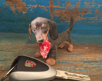 Dashel, our sweet little dashhund puppy