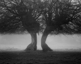 In The Mist - 01