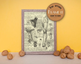 "Vintage illustration of Detailed Human Anatomy Overview by Leonardo da Vinci - framed fine art print, 8""x10"" ; 11""x14"", FREE SHIPPING - 210"