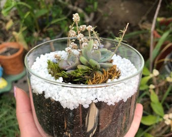 Small sized terrarium