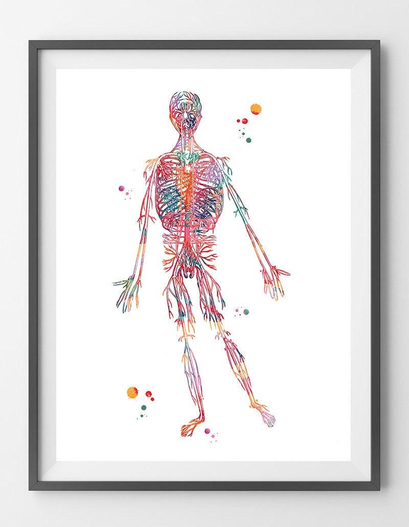 Erfreut Kreislaufsystem Arterien Ideen - Menschliche Anatomie Bilder ...