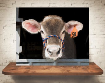 Brown Swiss Cow Photograph - Fine Art Print - Color Photography - Wall Art - Wall Decor -  Farm Pictures - Farmhouse Decor - Cows - Country