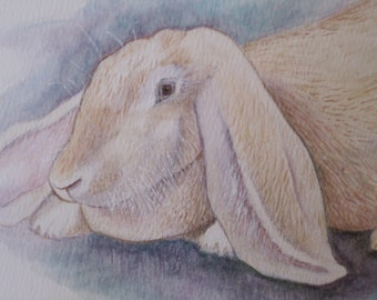 LONG EARED BUNNY (French Lop)