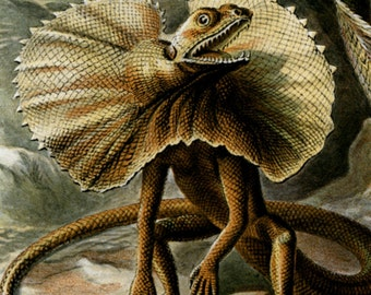 Scientific Art, Art Scientific, Lizards Reptiles, Lizards Art, Reptiles Lizards, Reptiles Art, Art Lizards, Art Reptiles, Ernst Haeckel, Art