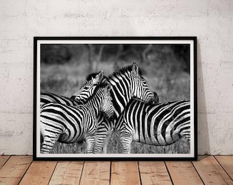zebra printable, zebra print, zebra print wall art, zebra print art, printable art, zebra photography, printable wall art, digital prints