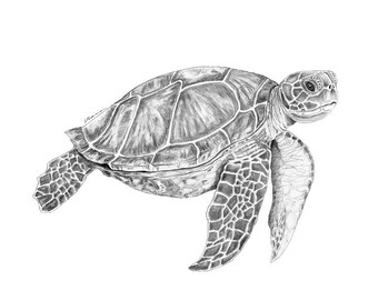 Sea Turtle Art | Nautical Decor | Sea Turtle Wall Art | Ocean Animals | Nautical Nursery | Turtle Art | Sea Turtle Decor | Ocean Nursery Art