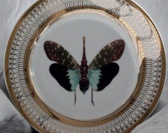 Gold Porcelain Butterfly Plates, Foodsafe Insect Dishes, Bug Tableware, Entomology Dishes, Butterfly China, PAYMENT PLANS AVAILABLE