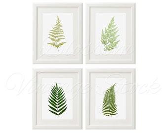 Botanical Printable Set Leaves Fern Botanical INSTANT DOWNLOAD Digital Images, Vintage Illustrations for Print 5x7, 8x10, 11x14 - 1283