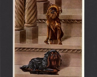 Brussels Griffon and King Charles Spaniel 1919 Vintage Print by Louis Agassiz Fuertes Painting Print Mounted &  Mat Bruxellois Spaniel Print