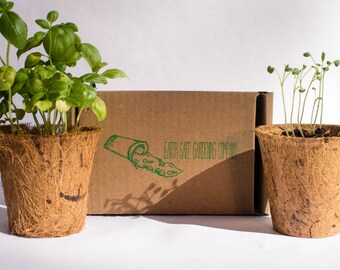 Indoor Herb Garden Kit (3 Pack) by Earth Safe Gardening Company | Basil,Parsley and Sage Seeds Mix