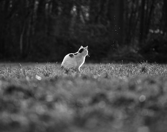 Fine Art Poster Print: Dreaming Away - photography - cat - black and white - quiet - calm - peaceful