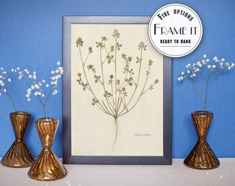 vintage botanic illustration of Pale-Flowered Trefoil  - framed fine art print, kitchen art, home decor FREE SHIPPING 59