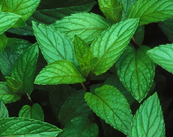 Peppermint Aromatherapy Lip Balm