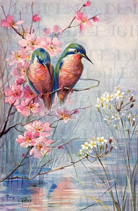 Stunning Humming BIRDS On Spring Dogwood Branch Vintage Bird