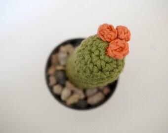 Mini cactus, succulent plant in pot metal hook