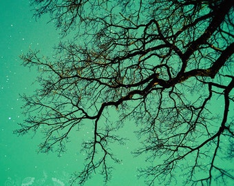 Tree Photo, Magical, Surreal, Fine Art Photography, Fairy Tale, Tree Branches, Sky, Stars, Teal, Turquoise, Forest - Reach for the Stars