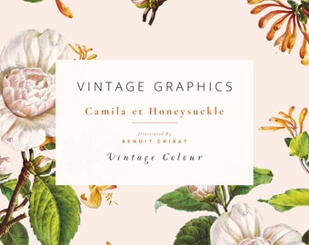 Vintage Clip Art & Graphics - Camila et Honeysuckle - Vintage Colour