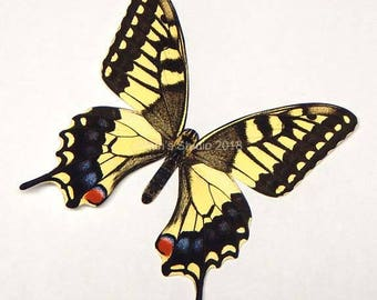 Realistic paper butterfly cutouts, Old World Swallowtail butterfly, 5 pieces