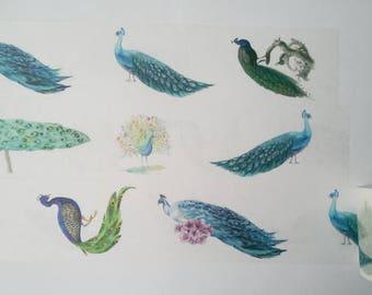 Design Washi tape Peacock Bird