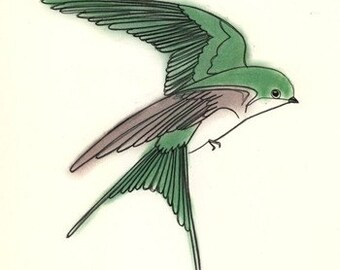 Bird art print Swallow Bird art print   - 4 for 3 SALE -  Jasper the Tree Swallow - 4 X 6