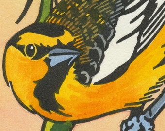 BULLOCK'S ORIOLE blank bird greeting card