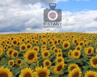 """8"""" x 10"""" Sunflower Field Photograph"""