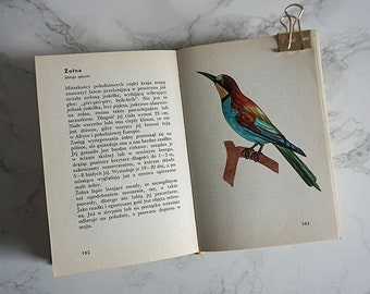 Vintage Illustrated birds Book | Vintage birds Illustrations | Birds Illustrations | Zoology book