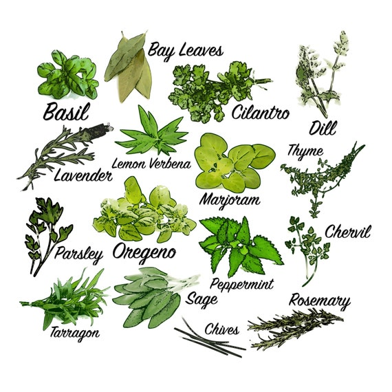 herb clip art herbs clip art herb labels garden herb kitchen rh etsystudio com Clip Art Drawings of Spices Spice of Life Clip Art