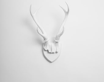 White Faux Taxidermy - X-LARGE Faux Deer Antler Trophy w/Plaque in White - Faux Taxidermy  - Mounted Deer Antlers