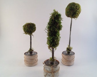 Shabby Chic Moss Topiaries, set of 3 Mini Moss Topiaries