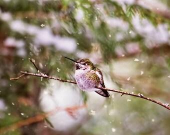 Hummingbird Print, Snow, Winter Birds, Hummingbird Art, Winter Photography, Humming Bird, Bird Photography, Hummer,Anna's,Nature Photography