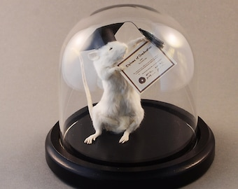 Taxidermy Graduation Mouse with Cap and Diploma