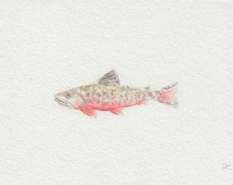 Brook Trout, Mini watercolor painting