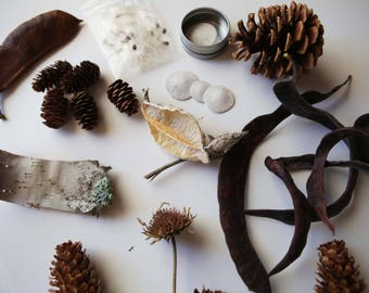 Nature Study Collection, Charlotte Mason, Montessori, Seed Pods, Naturalist, Dried Floral