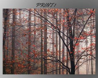 Forest, Ballerina, Waterfall andWolf Giclee Print