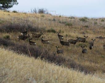Beautiful creatures of Deer Mountain Wall Art