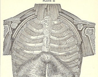 The Human Body .. 1919 Antique Plate From Medical Book .. Plate II