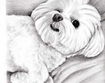 Custom Dog Pet Portrait Graphite Pencil 8x10