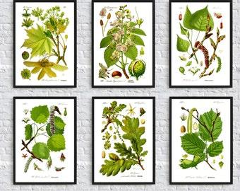 Tree Wall Art Print - Tree Leaves Print - Tree Set of 6 - Botanical Illustration - Tree Wall Art Decor - Types of Trees - Vintage Botanical