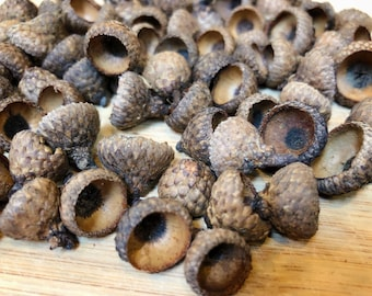 Acorn Tops - 50 Count - Acorns for Crafts - Assorted Sizes Acorn Tops