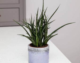 Planter no 144 (Blue & Grey)