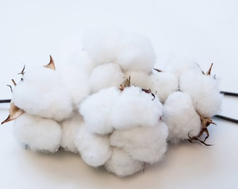 25 High Quality #1 NC Cotton Bolls Cotton Balls