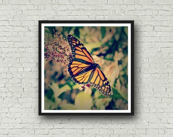 Monarch Butterfly Print - DIGITAL DOWNLOAD -Nature Photography Butterfly Home Decor Orange Black Butterfly Digital Print