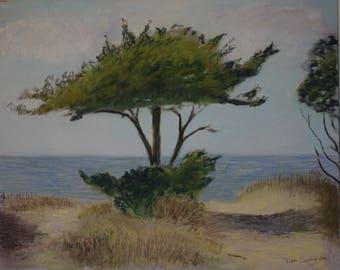 Cedar on the Pamlico Sound